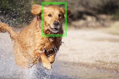 Kilitlenen AF takip görseli