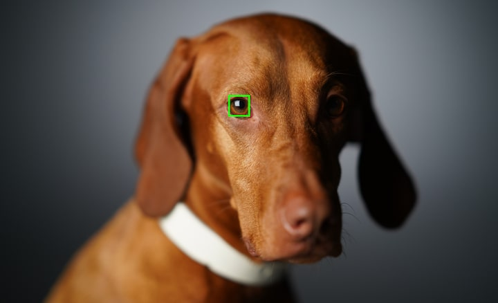 Yüksek başarı için hayvan gözü takipli Gerçek Zamanlı Eye AF