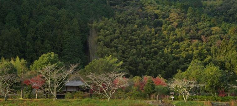 Dağ ve ağaçlar
