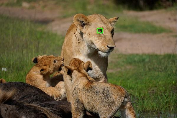 Hayvan için Gerçek Zamanlı Eye AF